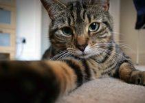 Fredy – nosso companheiro de estrada