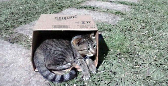 Fredy, o gato viajante e suas travessuras – parte 1