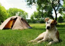 Pets Campistas e Campings Pet Friendly