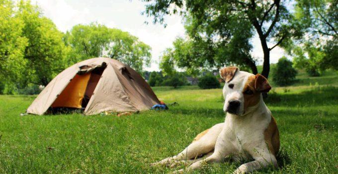 Pets Campistas e Campings Pet Friendly