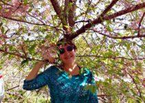 Festa da Cerejeira em Nova Friburgo
