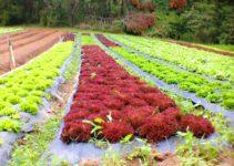Sítio do Moinho, alimentos orgânicos em Itaipava