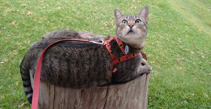 Gatos, misteriosos, independentes, amados, perseguidos…