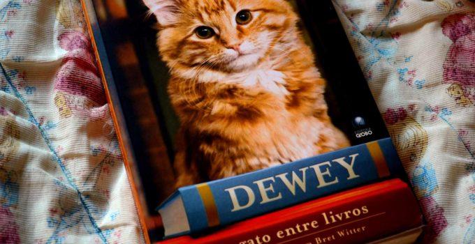 Dewey, o gato entre livros