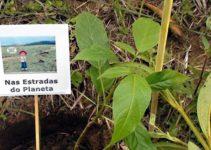 Muda plantada por nós na Serra da Gandarela em Mina Gerais