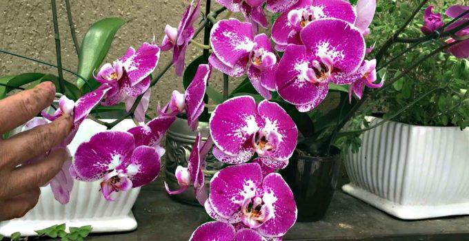 Festival de Orquídeas em Teresópolis