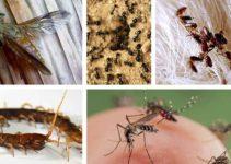 Picadas de insetos mais comuns