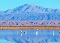 Laguna Chaxa no Atacama Chile