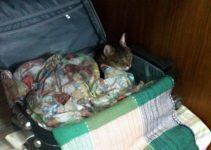 Viajando com seu animal de estimação