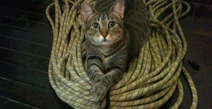 Fredy, o gato viajante, celebrando o dia internacional do gato
