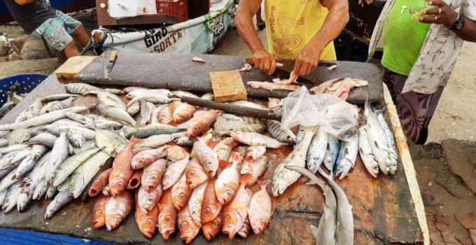 Onde comprar peixe fresco em Cabo Frio
