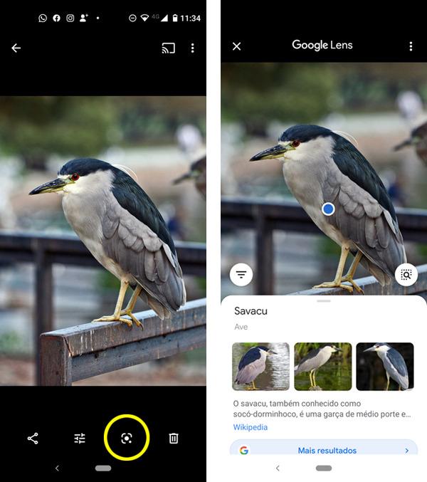 Google Lens, pesquisa por imagem de quase tudo. 1