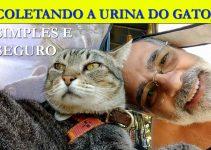 Como coletar a urina do gato