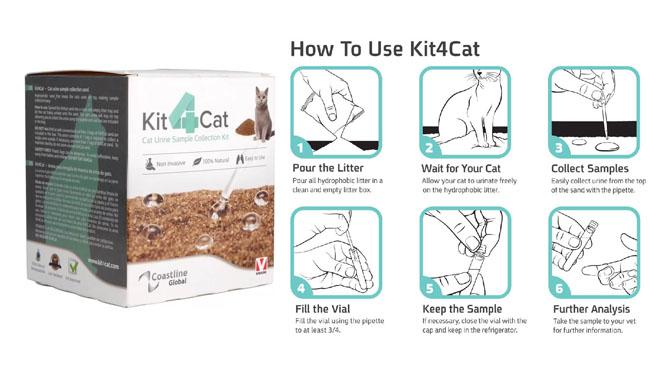 Como usar o Kit4Cat para coletar a urina do gato