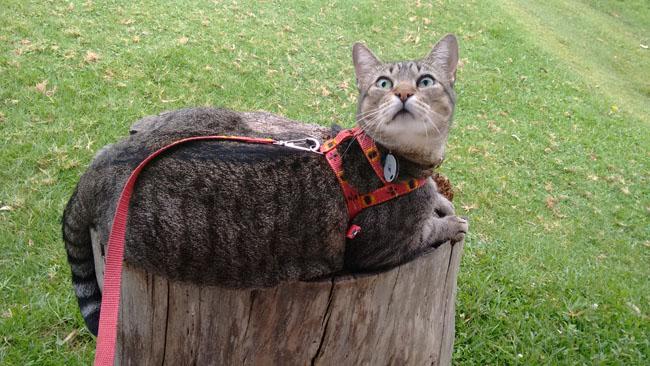 Fredy, o gato viajante que adora acampar